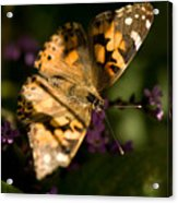 A Painted Lady Butterfly At The Lincoln Acrylic Print