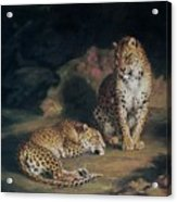 A Pair Of Leopards Acrylic Print