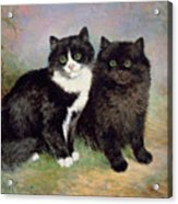 A Pair Of Pussy Cats Acrylic Print
