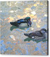 A Pair Of Wood Ducks Acrylic Print