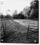 A Pasture Scene  Acrylic Print