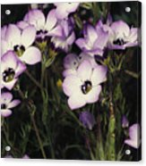 A Patch Of Wildflowers With White Acrylic Print