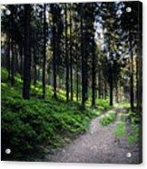 A Path Through A Dense Forest Acrylic Print