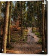 A Path Through The Woods Acrylic Print