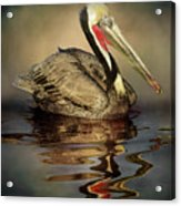 A Pelican And His Reflection Acrylic Print