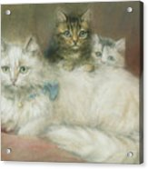 A Persian Cat And Her Kittens Acrylic Print by Maud D Heaps