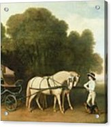 A Phaeton With A Pair Of Cream Ponies In The Charge Of A Stable-lad Acrylic Print by George Stubbs