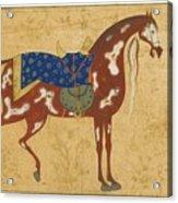 A Piebald Stallion Acrylic Print