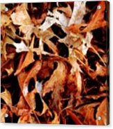 A Pile Of Leaves Acrylic Print