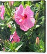 A Pink Hibiscus Acrylic Print