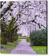 A Pink Pathway Acrylic Print