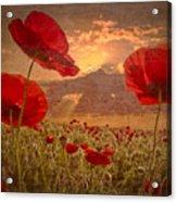 A Poppy Kind Of Morning Acrylic Print