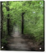 A Preview Of Speulderbos Acrylic Print