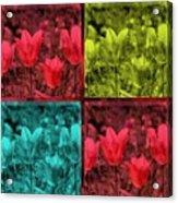 A Quadruple Of Tulips Acrylic Print