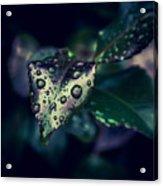 A Rainy Day Acrylic Print