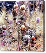 A Rather Thorny Subject Acrylic Print
