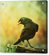 A Ravens Poise Acrylic Print