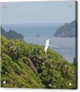 A Red-billed Tropicbird (phaethon Acrylic Print by John Edwards