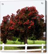 A Red Pin Under A Red Tree At Morro Bay Golf Course Acrylic Print
