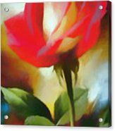A Red Rose For Amelia Acrylic Print