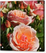 A Regiment Of Roses Acrylic Print