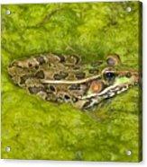A Rio Grande Leopard Frog Sitting On A Acrylic Print