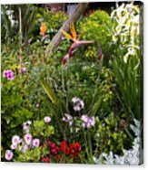 A Riot Of Flowers Acrylic Print
