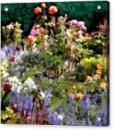 A Riot Of Roses Acrylic Print