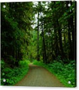 A Road Through The Forest Acrylic Print