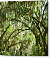 A Road To The Inside Just Outside Of Savannah Acrylic Print