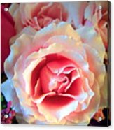A Romantic Pink Rose Acrylic Print
