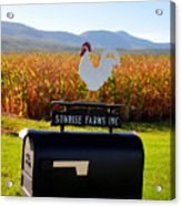 A Rooster Above A Mailbox 2 Acrylic Print