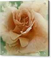 A Rose For Lady Mary Acrylic Print