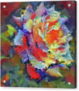 A Rose Impression Acrylic Print