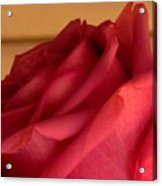 A Rose In Horizonal Acrylic Print