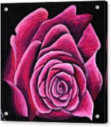 A Rose In Time Acrylic Print