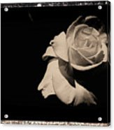 A Rose Is But A Rose  Acrylic Print