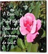 A Rose Is Proof Acrylic Print
