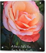 A Rose Is Still A Rose Acrylic Print