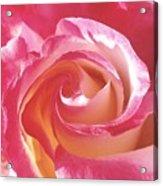 A Rose's Heart  Acrylic Print