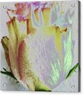 A Rosy Birthday Wish Acrylic Print