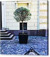 A Royal Tree Acrylic Print