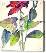 A Rpse Acrylic Print