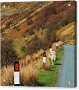 A Rural Vision From Wales Acrylic Print