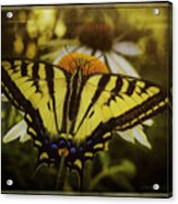 A Safe Place To Land Acrylic Print
