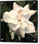 A Scent Of Gardenia Acrylic Print