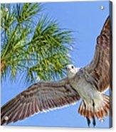A Seagull Flyby Acrylic Print