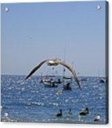 A Seagulll In-flight At Playa Manzanillo Acrylic Print