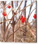 A Sign Of Spring Acrylic Print