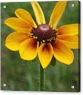 A Single Flower Acrylic Print